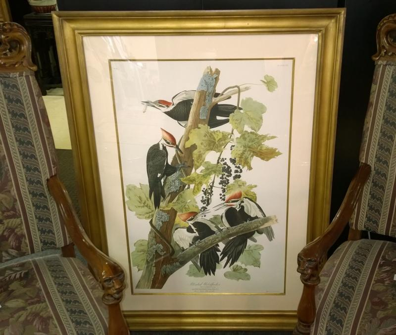 Audubon Ivory Billed Woodpeckers